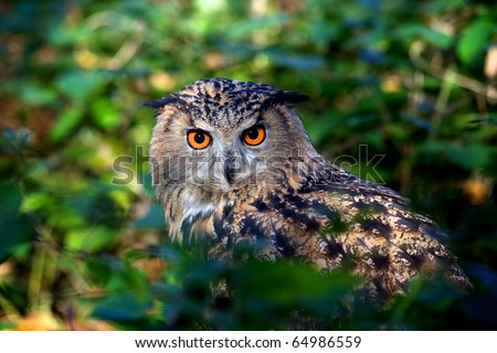 An eagle owl sitting in a wood
