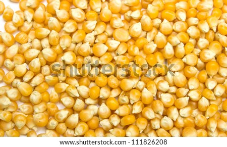 an ear of corn on a white background