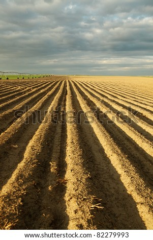 An early morning view of  a freshly planted potato field.