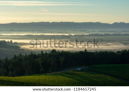 An early morning view of an Oregon vineyard, shafts of light crossing the rows, mist hanging in the distance below hazy hills.