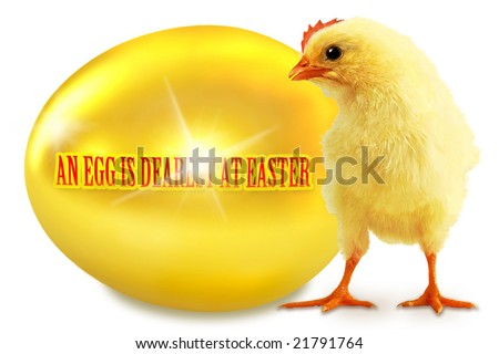 AN EGG IS DEAREST AT EASTER Chicken and gold egg on a white background - stock photo