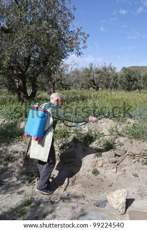 An elderly farmer spraying weed pesticide in an olive tree field in Spain.