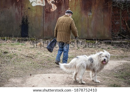 An elderly man walks the dog. Life in Russia. A pensioner walks out of the store. An old man with a stick goes to his goal. The white dog accompanies the old master. Social drama. Cold autumn day.
