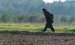 An elderly peasant woman walks along the fresh plowed field