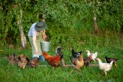 an elderly Russian woman in a hat feeds the chickens in the yard