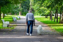 An elderly tall stooped man with a stick walks through the park with a dog on a leash. View from the back