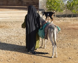 An elderly woman entertains tourists. An old granny with a donkey and a little goat. Bedouin life.