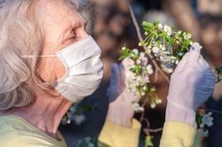 An elderly woman in a protective mask and medical gloves holds a branch of a blossoming cherry tree. Quarantine, health, precautions. Coronavirus covid19. Spring enjoyment, pleasure. Gardening