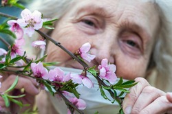An elderly woman in a protective respiratory mask and medical gloves holds a branch of a blossoming pink peach tree. Quarantine, health, precautions. Coronavirus covid19. Spring enjoyment. Pleasure