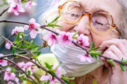 An elderly woman in round horned glasses and a protective respiratory mask sniffs a branch of a blossoming pink peach tree. Quarantine, health, precautions. Coronavirus covid19. Spring enjoyment