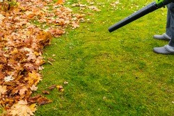 An electric cordless air blower blows yellow maple leaves off the lawn