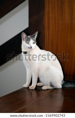 An elegant white cat beside the stairs of the house. Animal lover Animal life. Cat Lover