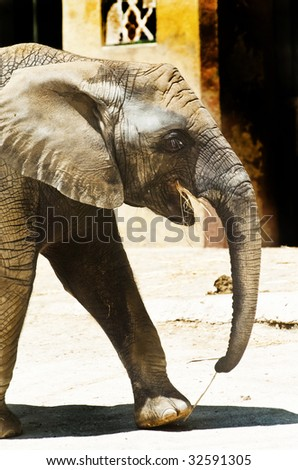 An elephant eating at the zoo