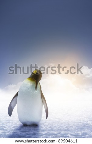 An Emperor penguin stands alone with the arctic sunrise - stock photo