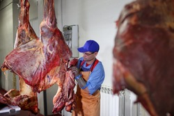 An employee of the meat workshop cuts horse carcass. Heavy labor at work. Horse carcasses hang in the shop.