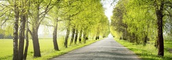 An empty alley (single lane rural road) through the green deciduous trees. Latvia. Spring landscape. Bicycle, sport, nordic walking concepts