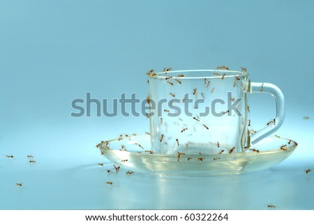 An empty cup and saucer covered by ants. Ideal concept for diabetes awareness.