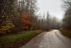 An empty dirt road with a sharp turn through the old trees in a strong morning fog. Coronavirus (COVID-19) outbreak, quarantine zone, Finland