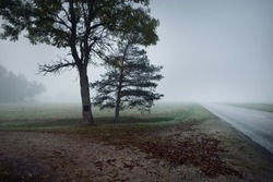 An empty highway (asphalt road) through the fields and forest in a thick fog at sunrise. Atmospheric landscape. Idyllic rural scene. Darkness, fall season, fickle weather, dangerous driving, road trip