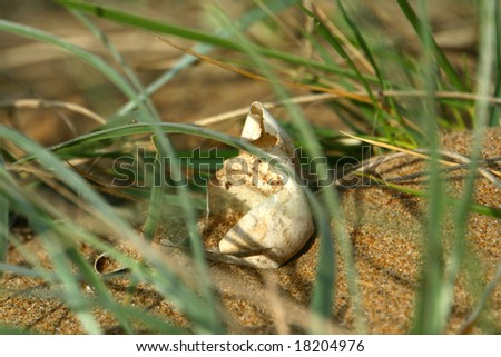 An empty sea turtle egg on the beach in the grass
