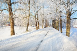 An empty snow-covered alley through the tall frosty trees on a clear day. Bright blue sky, warm sunlight. Latvia