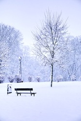 An empty snow-covered park bench near a tree on a winter day. Snow-covered city park, snowfall. Winter landscape.