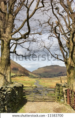 An English lake District farm gate bordered by two treees in Winter