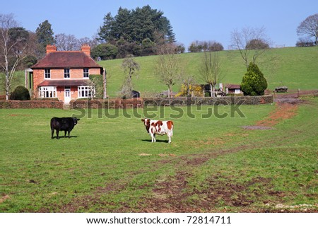 An English Rural Landscape with Farmhouse and grazing Cattle