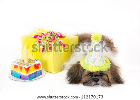 An exhausted Shih Tzu wearing a party hat guards a cake and a birthday present.