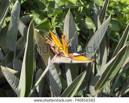 An exotic dragon headed flower. #740856583