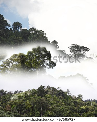 An exotic image of a tropical rainforest canopy on a misty early morning.