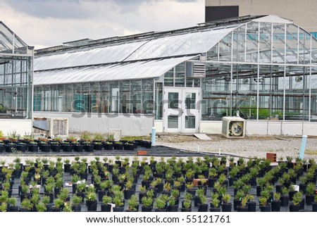 An expanse of small shrubs in pots with greenhouses behind.