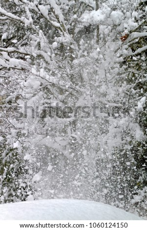 An explosion of snow cascades off the tangled branches of a denuded dogwood tree in winter #1060124150