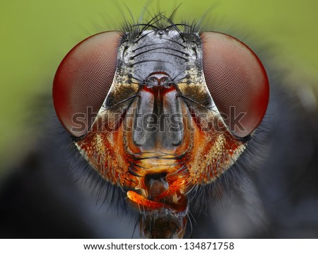 An extreme close up of a fly head taken with microscope objective.