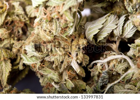 An extreme macro shot of a cannabis bud that had been grown by hydroponic process.