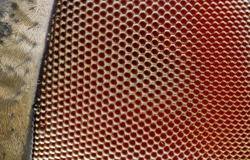 An extreme sharp 25x close up of the compound eye of a fly.