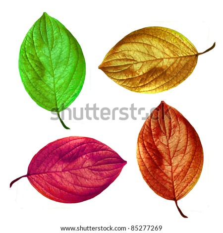 An illustrative image of leaves on white background
