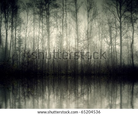 An image of a beautiful forest with fog in bavaria germany #65204536
