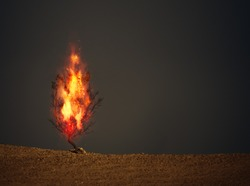 An image of a burning thorn bush christian symbol
