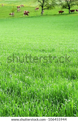 an image of a group of cows on the grass