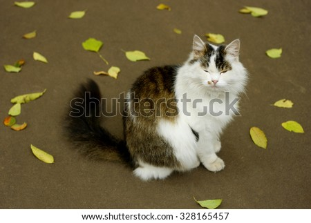 An image of a large fluffy cat with narrowed eyes. Cat sitting on a paved road among yellow fallen leaves.