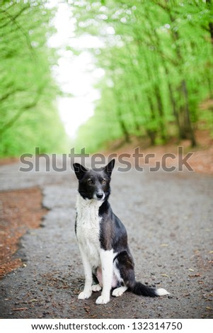 An image of a lonely dog sitting on a road