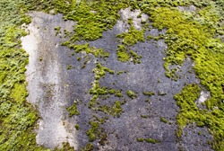 An image of a moss growing on a concrete wall.