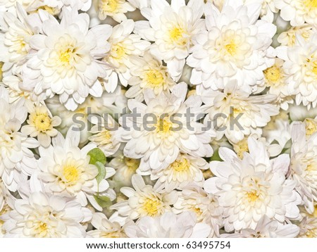 An image of a nice white flower background