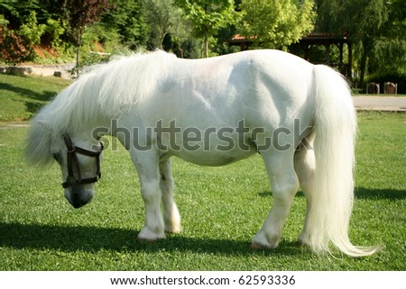 an image of a single white pony #62593336