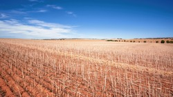 An image of a south australia agriculture dry field