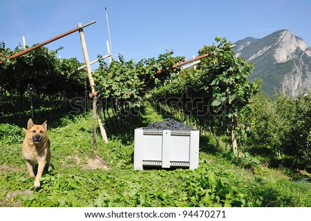 An image of a vineyard in the mountains