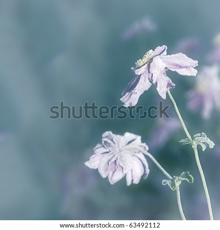 An image of an autumn icy flower