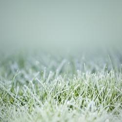 An image of an autumn icy grass