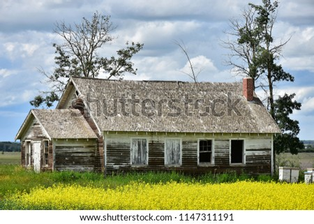 An image of an old abandoned farmhouse and yellow canola field.